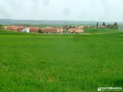 Alcornocal Dehesa Vieja-Atalaya Arrebatacapas;monton de trigo piedra escrita ocentejo